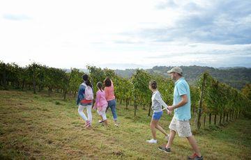 Balades vigneronnes
