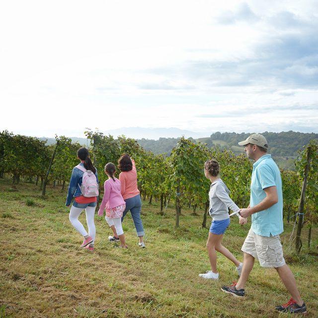 Balades vigneronnes autour de Monein - Coeur de Béarn