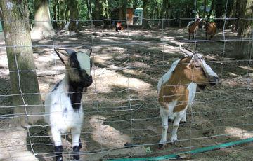 Animal park of the Aurit Fishery in Hagetaubin