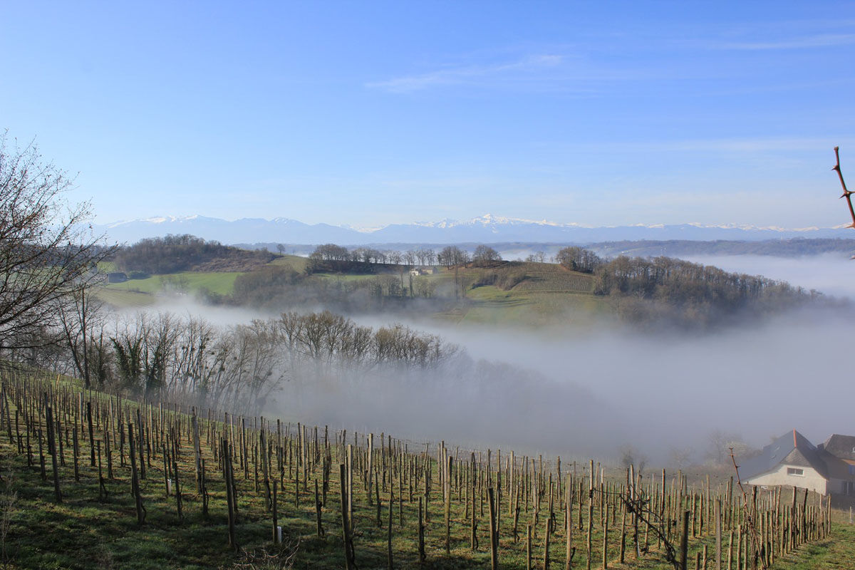 The Jurançon vineyard in winter