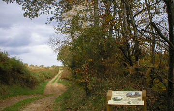 Sentier d'interprétation du bois de Laring à Monein