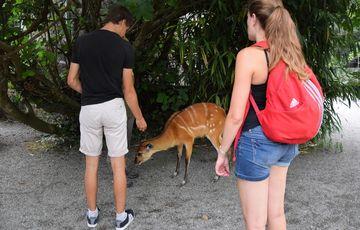 Le zoo d'Asson