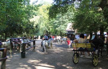 Balades à poney à la pêcherie d'Aurit à Hagetaubin