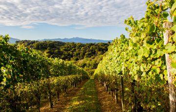 Vue sur les Pyrénées depuis le vignoble du Jurançon
