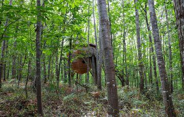 Au cœur de la forêt les cabanes des Nids du Béarn