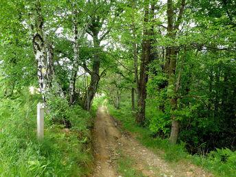 Sentier Entre Bois et Panoramas au départ de Monein