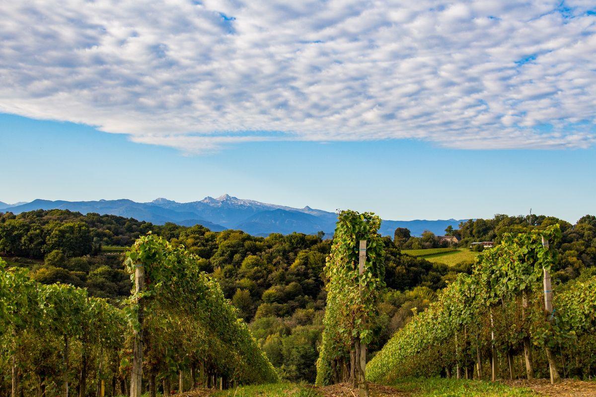Vignes du Vignoble du Jurançon à Monein