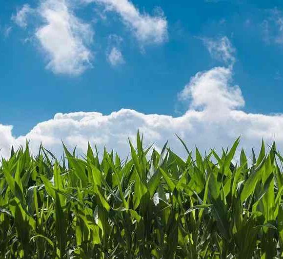Soirée débat : Agriculture et projets de territoire - ORTHEZ