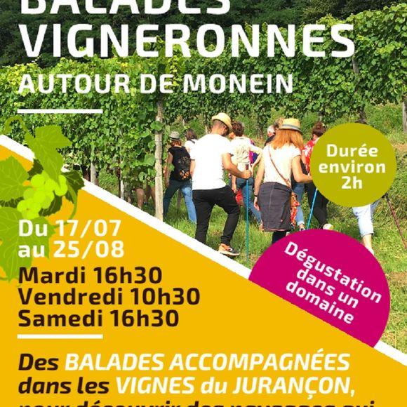 Balade vigneronne : Clos Mazangé - MONEIN