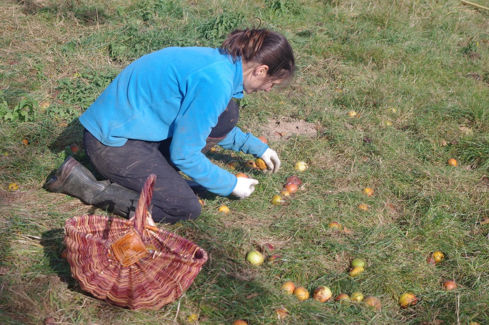 Initiation à la taille des arbres fruitiers - CASTEIDE-CAMI