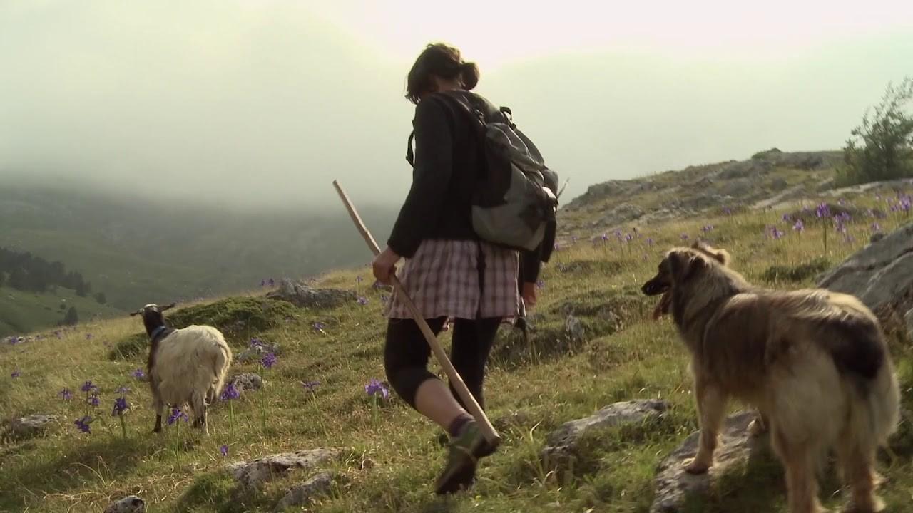 Documentaire : Des brebis et des femmes - SALLESPISSE