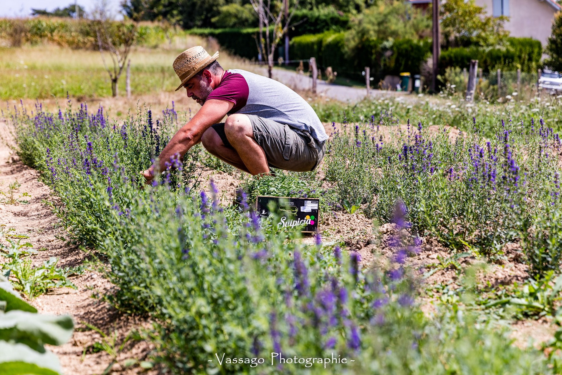 Découverte d'un métier d'antan : paysan herboriste - BAIGTS-DE-BEARN