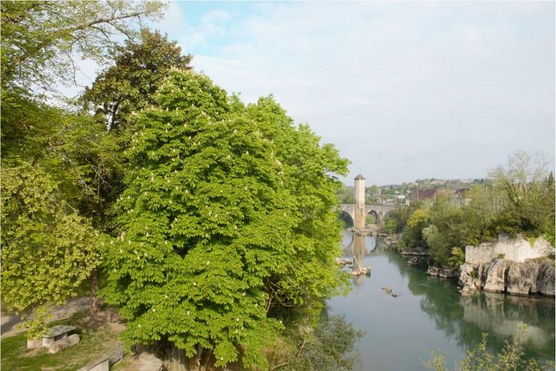 Journées du patrimoine de pays : Les arbres exceptionnels - ORTHEZ