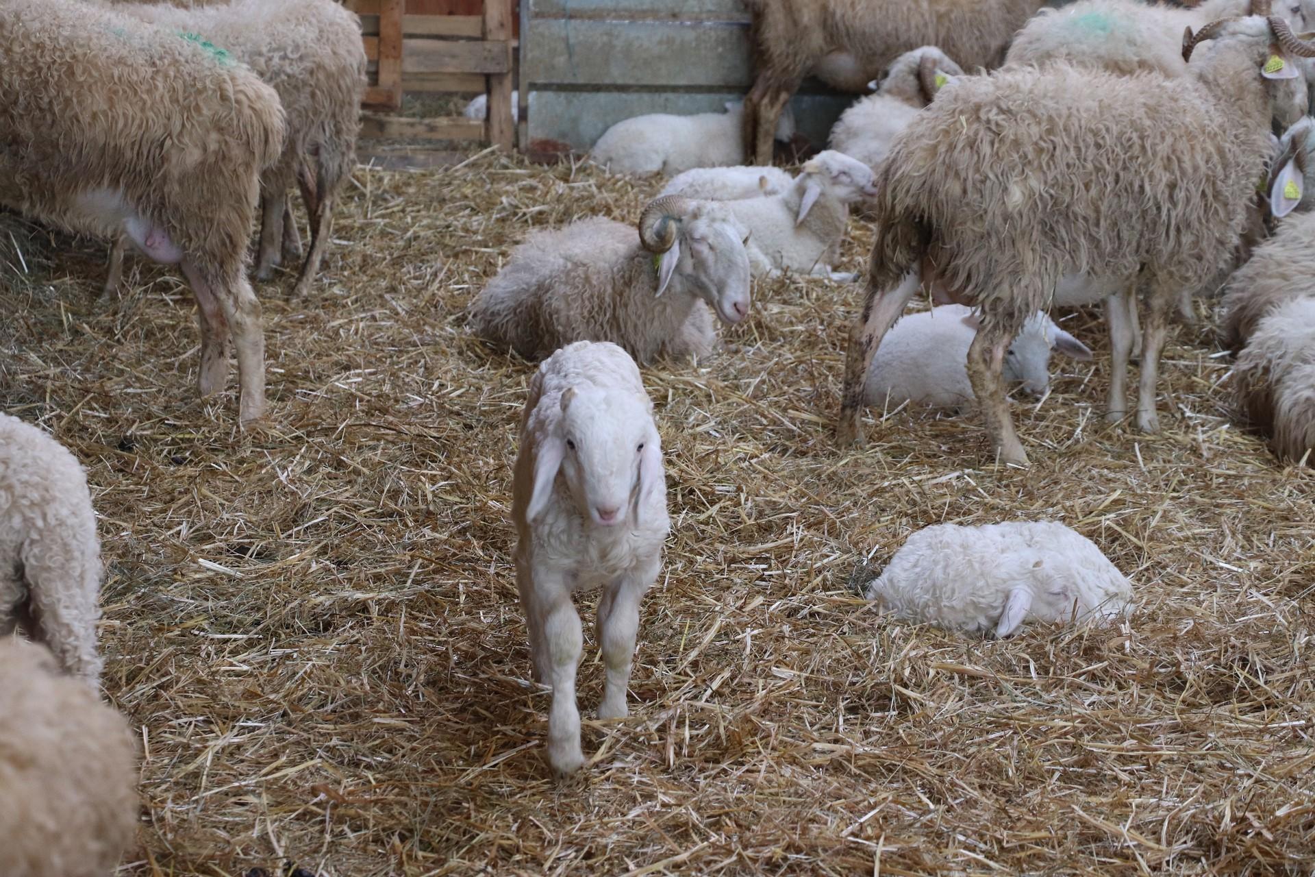 Rendez-vous à la ferme : Ferme Coussirat - MONEIN