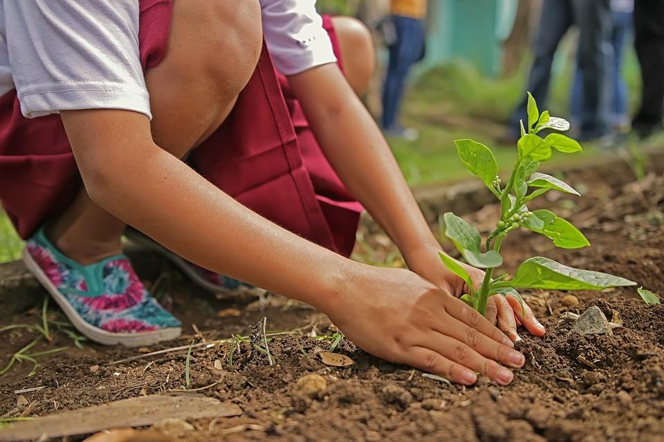 Ateliers Vivre au naturel : Réaliser ses semis - ORTHEZ