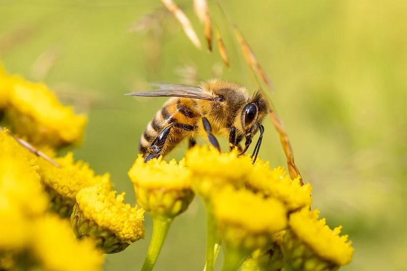 Ciné-discussion : Etre avec les abeilles - MONEIN