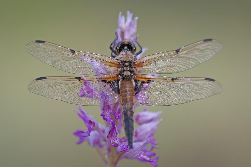 Atelier: A la découverte de la biodiversité - MOURENX