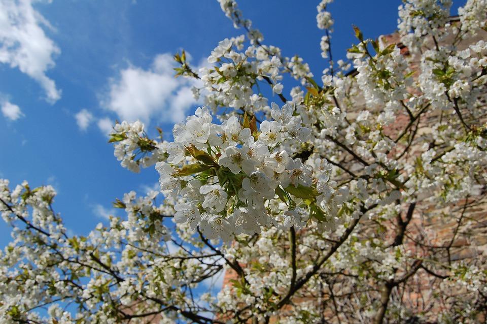 Planter pour la biodiversité - ARTHEZ-DE-BEARN