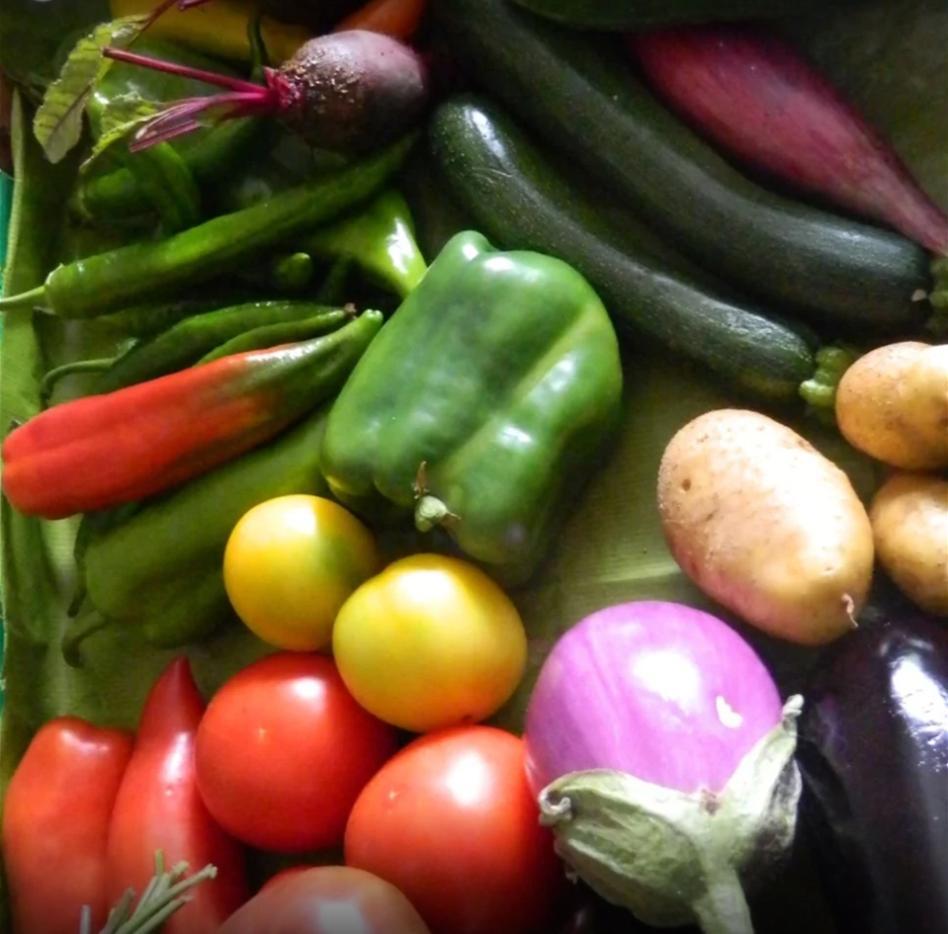 Animation CPIE: Légumes et aromates - MONEIN