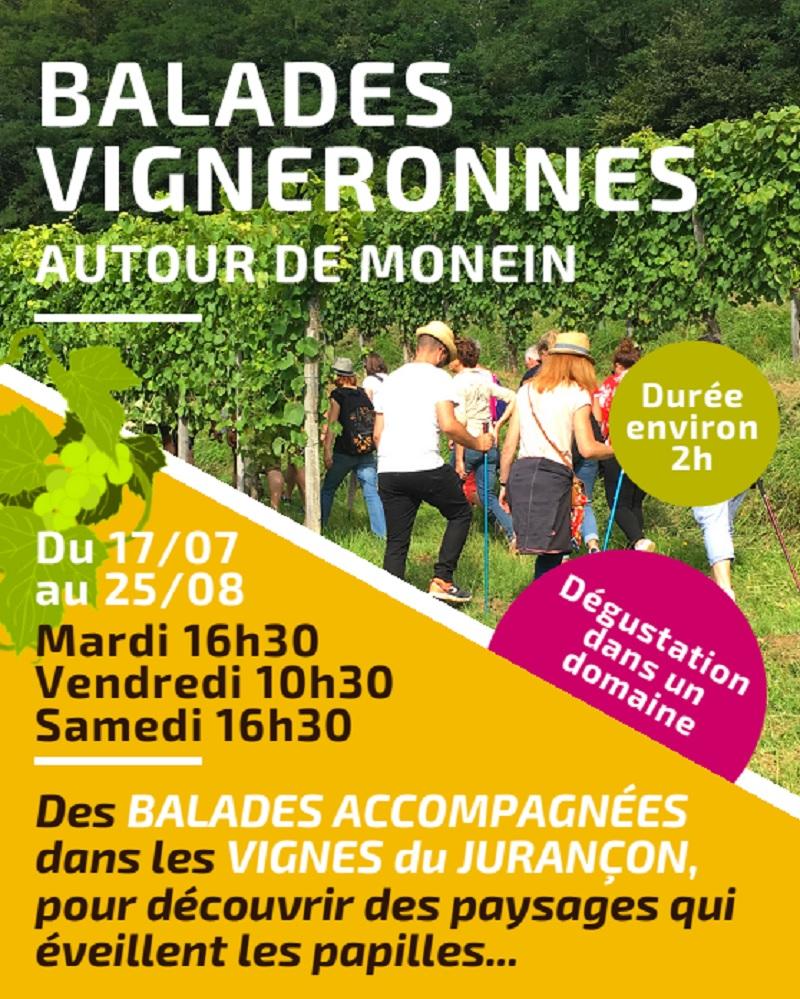 Balade vigneronne : Domaine Montesquiou - MONEIN