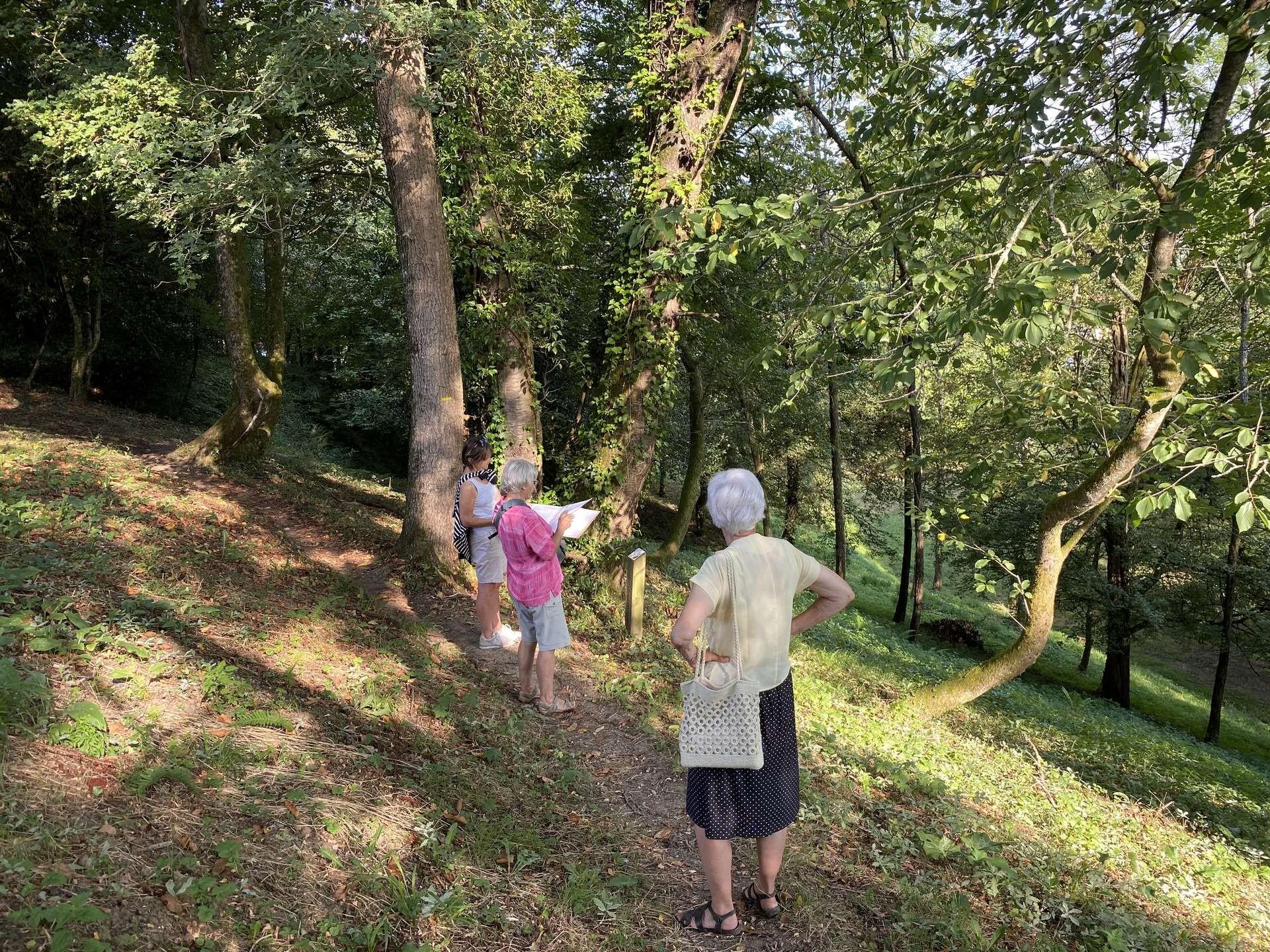 Journée du patrimoine de pays : Visite botanique du bois de la Coudanne - ORTHEZ