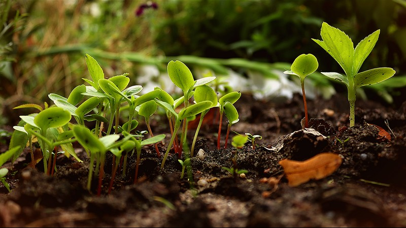 La permaculture, mode d'emploi - MONEIN