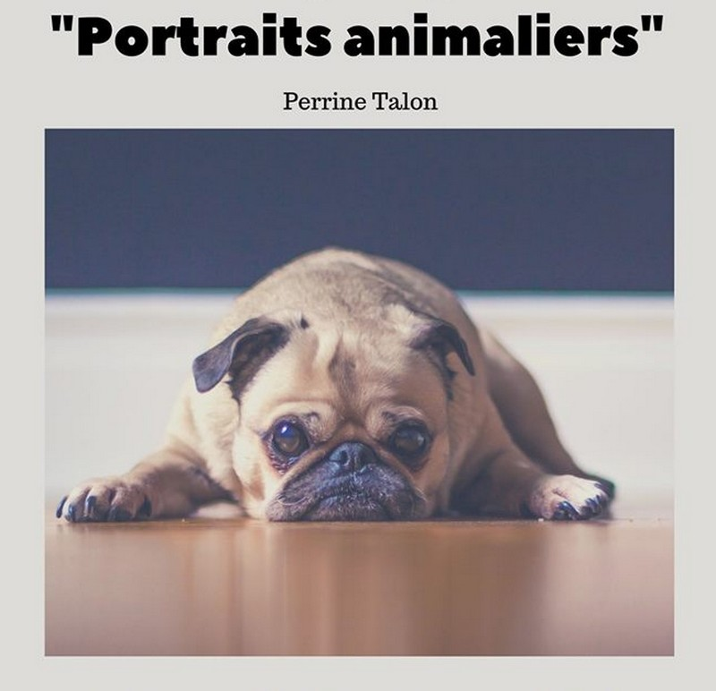 Exposition : Portraits animaliers - MONEIN
